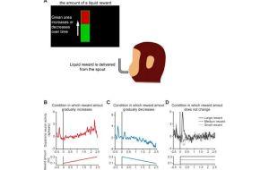 Форма будущего: смена наград кодируется с помощью специальных нейронных паттернов.