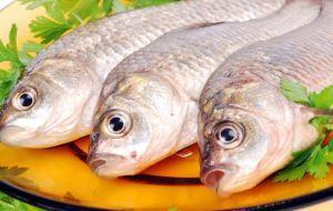 Употребление рыбы при панкреатите