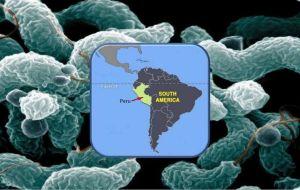 Исследователи выяснили причину вспышки синдрома Гийена-Барре в Перу