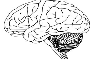 Может ли утечка через гематоэнцефалический барьер быть причиной плохой памяти?