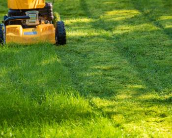 Машины, которые делают работу в саду более приятной