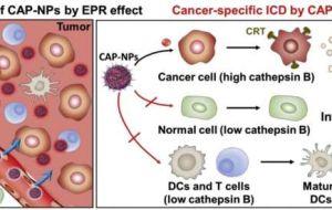 Новый противораковый иммунотерапевтический препарат: меньше побочных эффектов, больше терапевтических