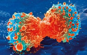 Индивидуальная терапия нейробластомы способствует клеточному метаболизму
