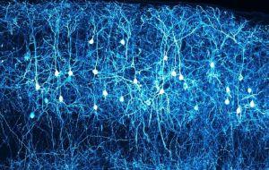 Структурирование неокортекса головного мозга