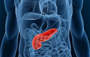 Роль гормонов поджелудочной железы в организме