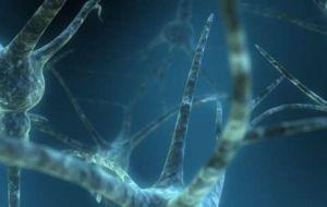 Исследования на животных показывают, что генная терапия с использованием «цинковых пальцев» может помочь в лечении болезни Альцгеймера