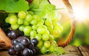 Влияние винограда на течение панкреатита