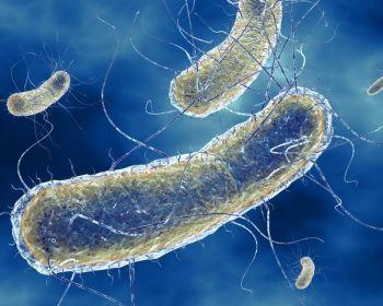 Разновидности кишечной палочки и их влияние на организм