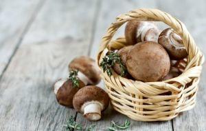 Опасность употребления грибов при панкреатите