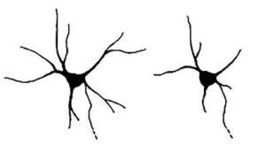 Мутации в гене нейрохондрина, связанные с эпилепсией