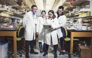 Исследование стволовых клеток выявило молекулярный «переключатель», который превращает предшественников в клетки почек
