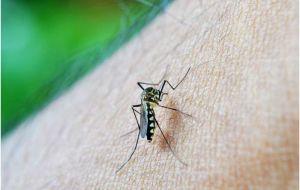 Новые клетки используются для засады и уничтожения малярии сразу после передачи