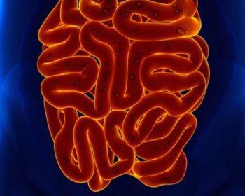 Причины развития амебной дизентерии, способы лечения и профилактики