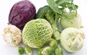 Рекомендации по употреблению капусты при панкреатите
