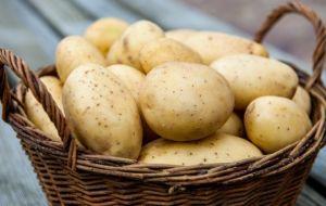 Правила употребления картофеля при панкреатите