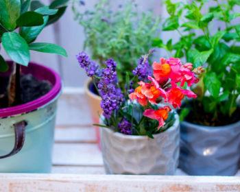 Какие цветы в горшках выбрать для дома?