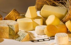 Влияние сыра на организм при панкреатите