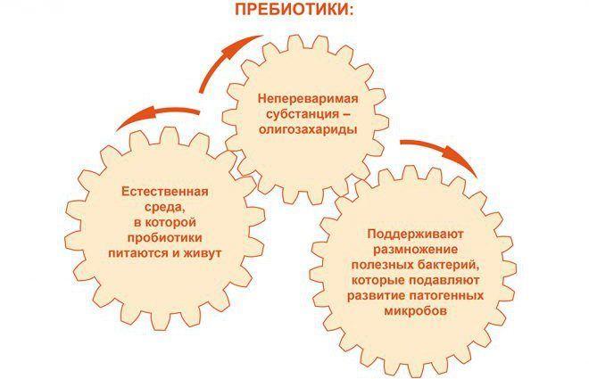 Функции пребиотиков