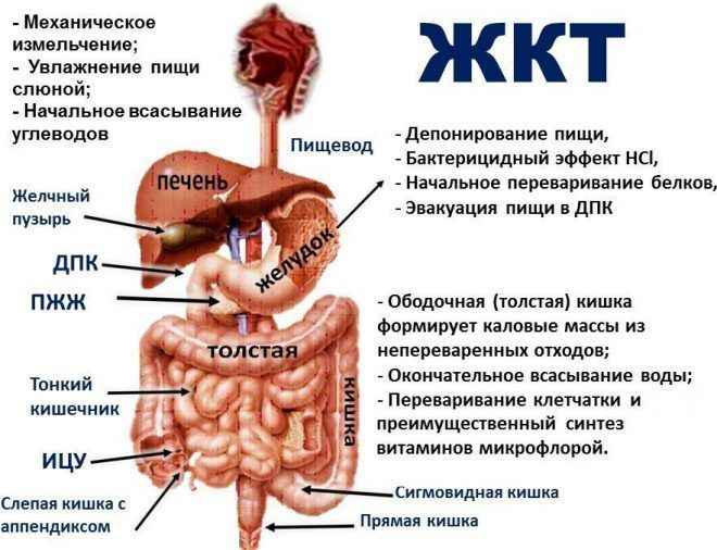 Онкологические заболевания желудочно-кишечного тракта