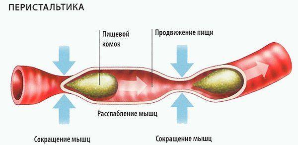 Сниженная перистальтика кишечника