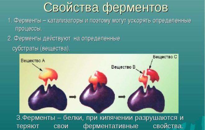 Как действуют ферменты