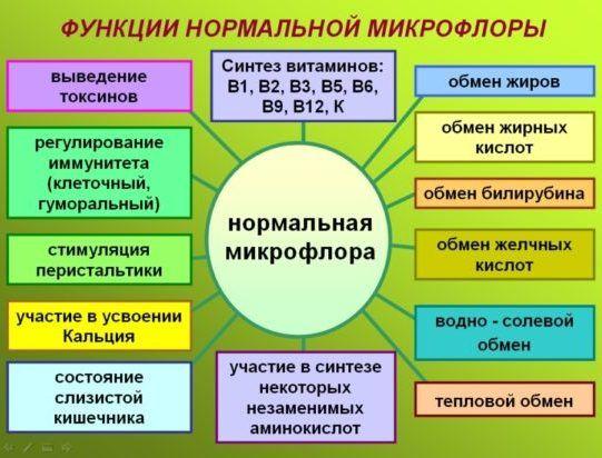 Основные функции микрофлоры