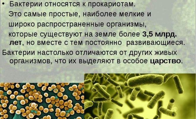 Бактерии в кале
