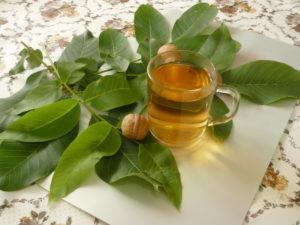 Листья грецкого ореха для лечения панкреатита