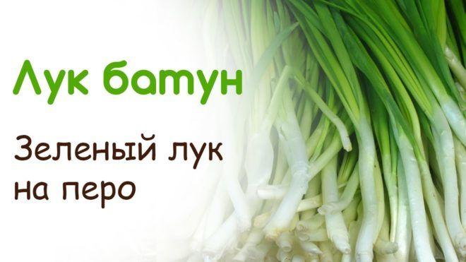 Зеленый лук на перо
