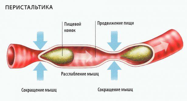 Билирубин в кале при ускорении перистальтика кишечника