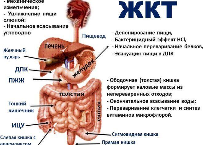 Заболевания органов ЖКТ