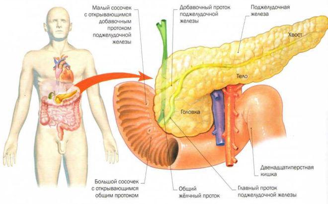 Патологические процессы поджелудочной железы