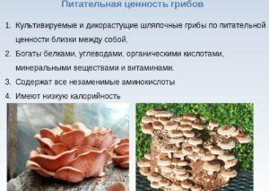 Ценность грибов