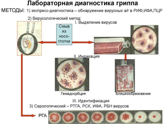 Методы диагностики желудочного гриппа